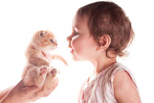 L'arrivée d'un bébé avec un chat à la maison
