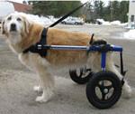 Le matériel pour chien handicapé
