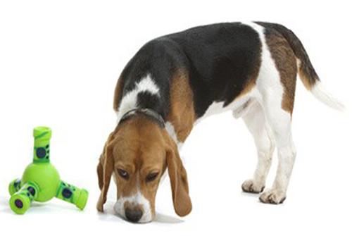 Le rôle de l'humidité du nez du chien