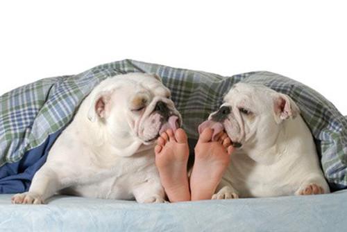 Le système olfactif canin