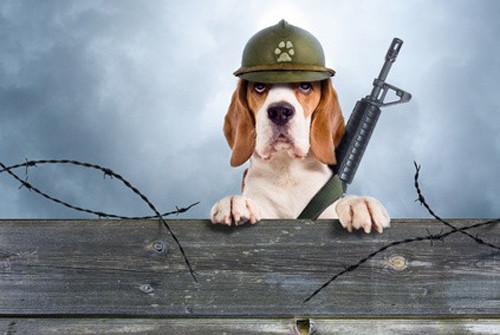 L'éducation du chien en club canin