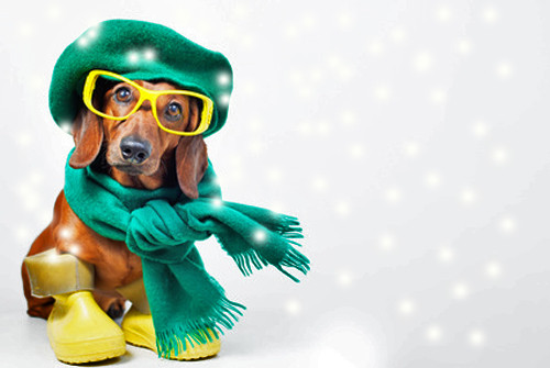 Les chiens ont-ils froid: rhume, grippe...