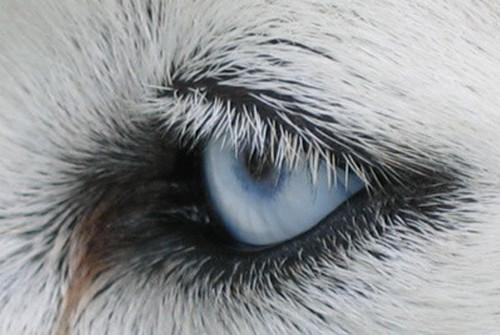 Les chiens voient-ils comme nous ?