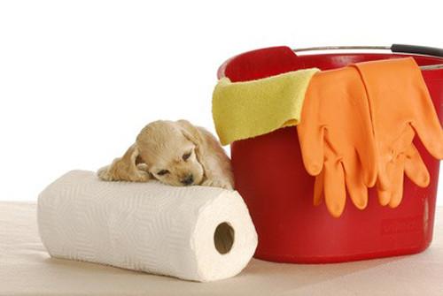 Les problèmes d'incontinence chez le chien