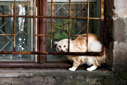 Comment capturer un chat sauvage ?