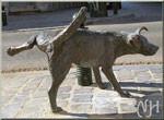Pourquoi un chien mâle urine-t-il tout au long de la promenade ?