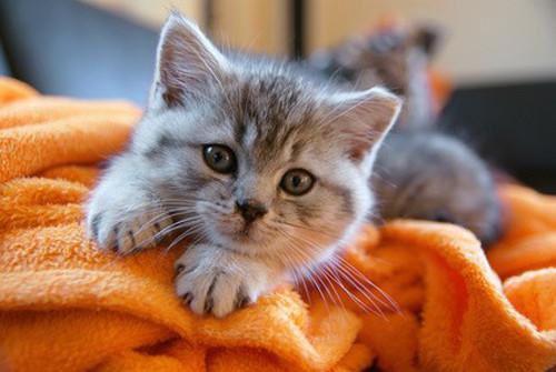 Prodiguer les meilleurs soins à son chaton