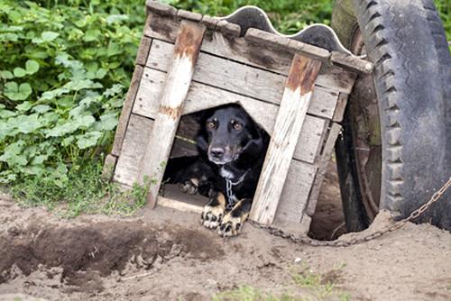 Quels matériaux choisir pour la niche de son chien?