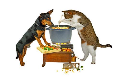 Quels sont les différents types d'alimentation pour le chien ?