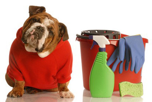 Solutions contre l'incontinence de votre chien
