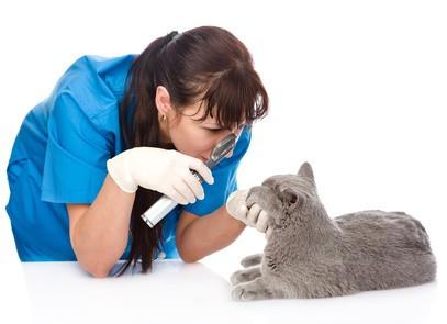 Vomissements, purge de votre chat ?