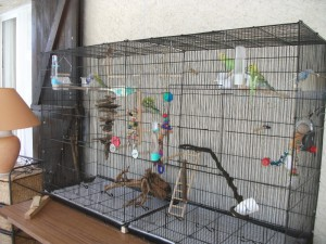 Aménagement de la cage de votre oiseau