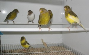 Arrivée de l'oiseau : Préparez son installation