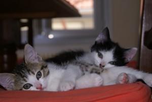 Arrivée du chaton : Préparez son installation