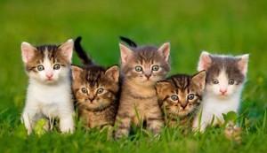 Choisir un chaton ou un chat adulte ?