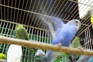 Choix d'une cage pour votre oiseau