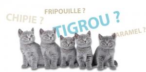Des noms pour votre chat : 2014, l'année du « J »