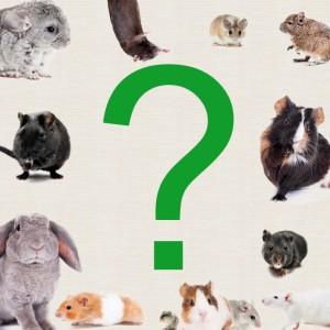 Quelles questions se poser avant d'adopter un rongeur ?