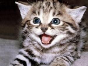 Questions à se poser avant d'adopter un chat ?