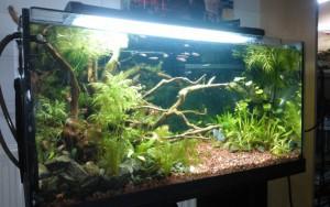 Votre aquarium idéal : Quelques questions à se poser !