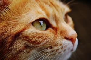 Choisir un chat qui nous ressemble ?