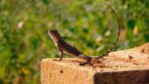 Choisir un reptile pour débuter