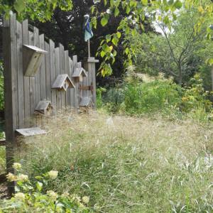 Aménager son jardin pour les oiseaux ?
