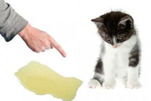 Comment empêcher mon chat d'uriner partout ?