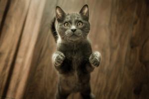 Education du chat : punition et récompense