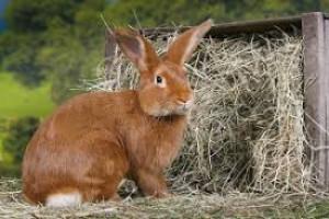 Le bon apport de fibres pour l'alimentation des lapins et rongeurs