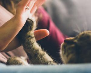 Le meilleur anti-puce chat