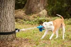 Les jouets pour chien ou chiot