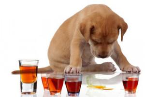 Conseils sur les vomissements du chien