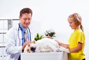 L'hypothyroïdie chez le chien