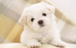 Quand acheter un chien ?
