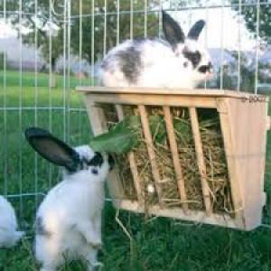 Mes rongeurs et lapins peuvent-ils vivre en extérieur ?