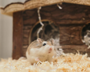 Prix d'un hamster