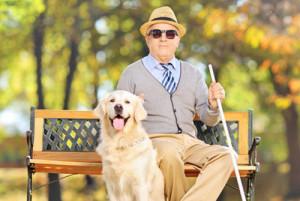 Promener son chien guide d'aveugle