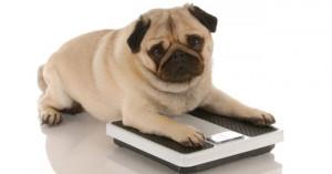 Quelle alimentation prévoir pour un chien senior ?