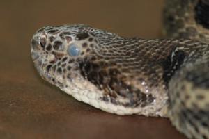 Quelles sont les maladies les plus courantes pour les serpents ?