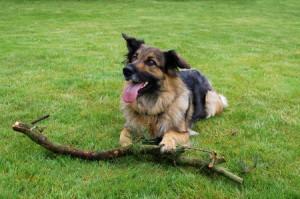 Quelles sont les meilleures méthodes pour faire obéir son chien ?