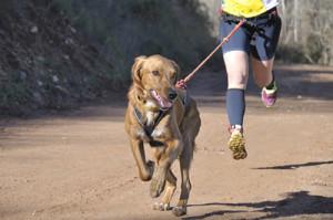 Quels sont les sports canins ?