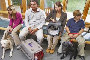 Reconnaître la maladie du foie chez le chien