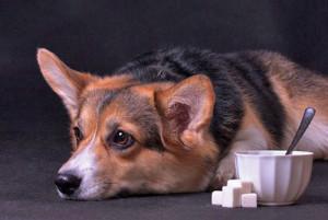 Résoudre les problèmes de diarrhée de votre chien