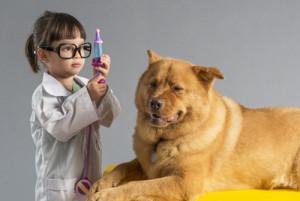 Tout savoir sur le vaccin du chien