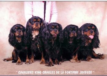 Elevage FONTAINE JOYEUSE Cavalier King Charles Spaniel *