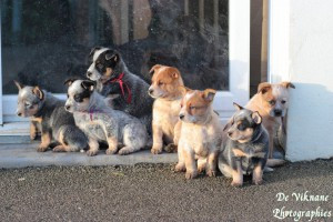AURELIE GRALL éducatrice et comportementaliste canin*