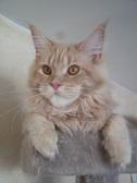 Chatterie de CALIX CAT*