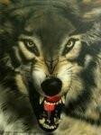 CANIPRO CONSEILS éducateur canin etude du comportement *
