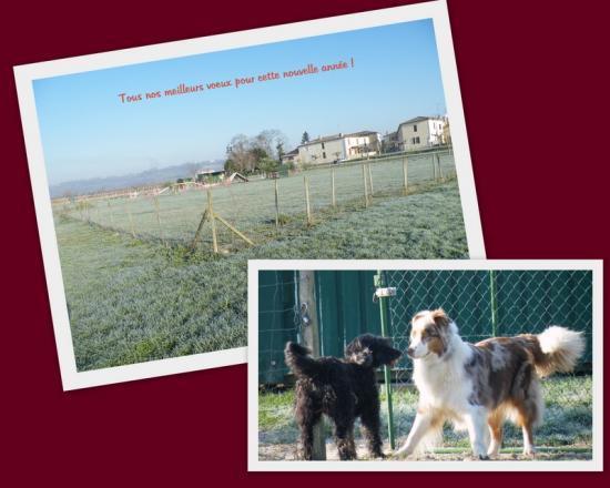 Club Education Canine Agility Obéissance Sud Gironde